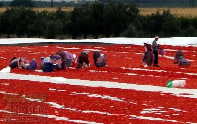 Akhisar'da domates kurutma sergisi 1