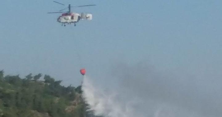 Akhisar'da 50 dönüm orman alanı kül oldu