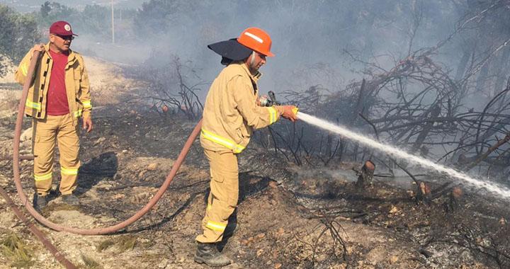 Akhisar'da 10 hektar orman kül oldu
