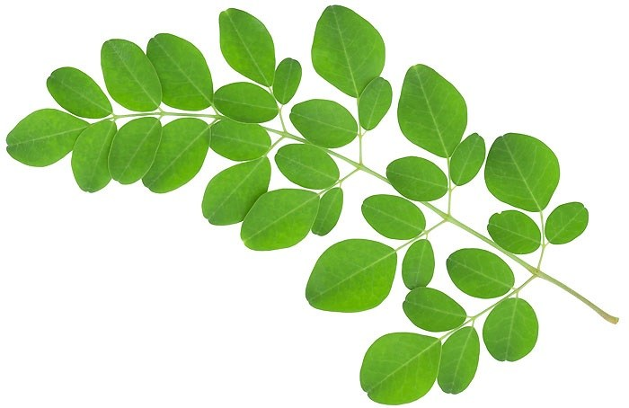Moringa faydaları ve zararları nelerdir? Hemen satın al