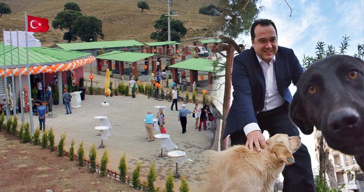 Dutlulu'dan sokak hayvanlarına yaşam merkezi projesi