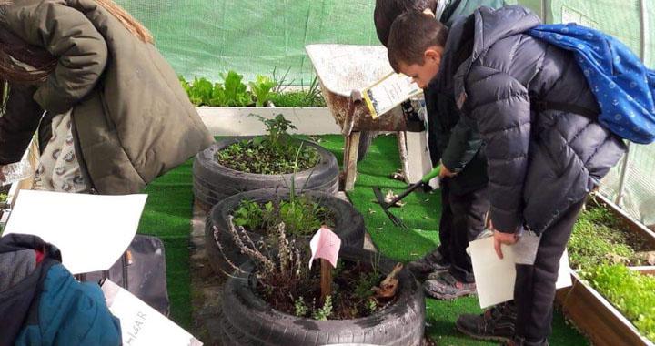 Okulda Sera Greenhouse At School