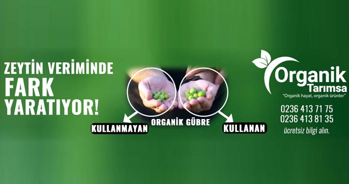 Organik Gübre, zeytinde fark yaratıyor!