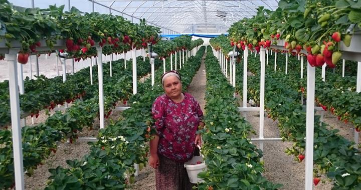 Genç çiftçi projeleri yüz güldürmeye devam ediyor