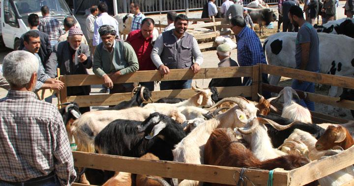 Akhisar'da kurbanlık satış ve kesim yerleri açıklandı!