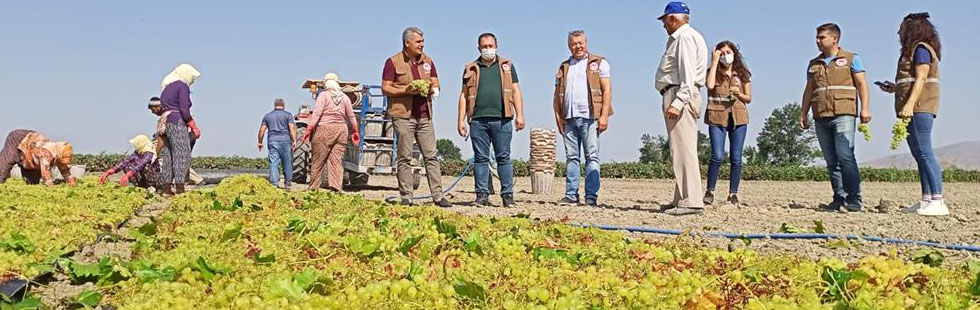 İlçe Tarım Müdürlüğü'nden üzüm hasadı yapan çiftçilere ziyaret