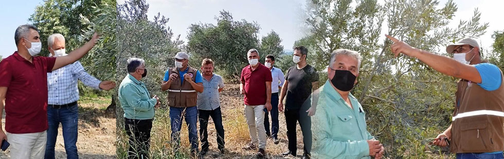 Hasat öncesinde zeytin üreticilerine ziyaret