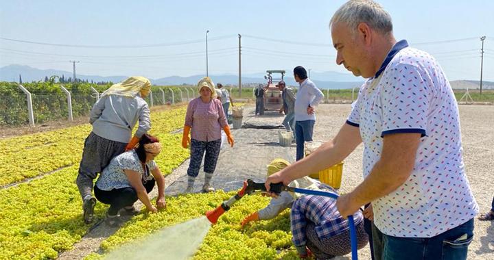 Bakırlıoğlu; üzüm üreticisi fiyat bekliyor!