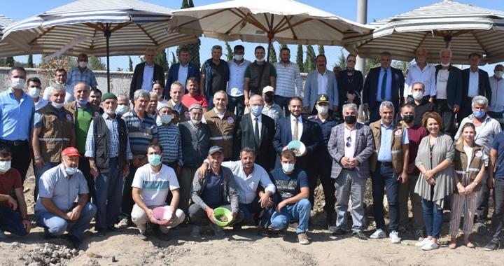 Akhisar'da salep yumruları toprakla buluştu