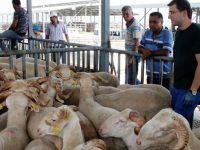 Kurban pazarında denetimler aralıksız sürüyor