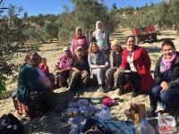 Akhisar Kadın Meclisi, zeytin hasatını şenliğe çevirdi