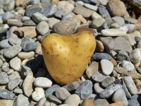 Patatesin Mutfak Hayatımızdaki Yeri