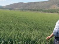 Mehmet Çandar, çiftçiler gününü kutladı