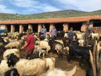 2016 yılı anaç koyun keçi desteklemesi ödemeleri başlıyor