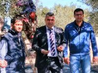 Akhisar'da zeytin hasadı hız kazandı