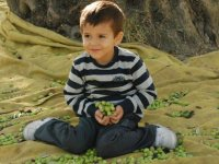 Akhisar'da zeytin sektörüne TKDK eli değdi!