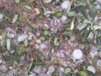 Akhisar'da zeytinlikleri dolu vurdu