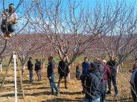 Akhisar İlçe Tarım uygulamalı eğitimlerine devam ediyor