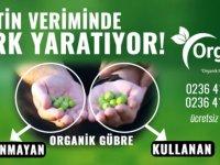 Organik Gübre Zeytinde Fark Yaratıyor!
