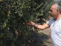 """Milletvekili Bakırlıoğlu, """"Organik tarım ve iyi tarım desteği kalkıyor mu?"""""""