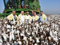 Vali Deniz, Akhisar'da pamuk hasadına katıldı