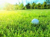 Golf Saha Çimi Seçerken Nelere Dikkat Etmelisiniz?