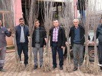 Akhisarlı çiftçiye ilk aşamada Bin 200 fidan dağıtıldı