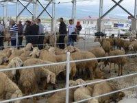 Akhisar'daki hayvan pazarları açılıyor işte alınan tedbirler