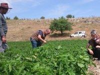 İlçe Tarım Müdürlüğü, sebze üreticilerini yalnız bırakmıyor
