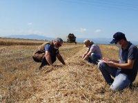Buğday üretiminin her aşamasında ilçe tarım var