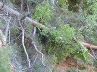 Kestiği ağacın altında kalarak hayatını kaybetti