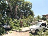 Çınar ağacı yıllara yorgun düştü! 3 araç altında kaldı