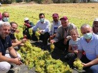 Bakırlıoğlu: Üzüm fiyatı çiftçiyi memnun etmedi
