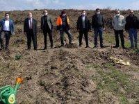 Zeytinin Başkenti Akhisar'a 11 bin yeni zeytin ağacı daha