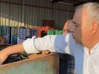 Bakırlıoğlu: Sofralık zeytine 1 lira, zeytinyağına 3 lira destek verilmeli