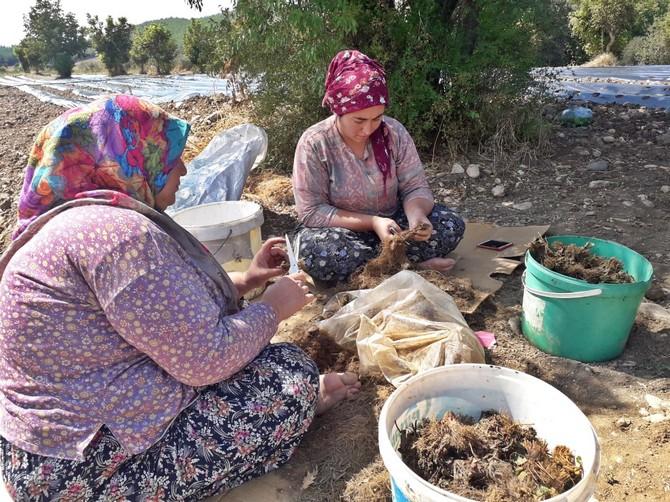 akhisar-belediyesi'nden-kadin-ciftcilere-buyuk-destek-(4).jpg