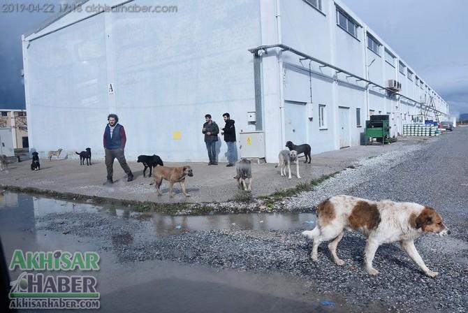 baskan-dutlulu,-sokak-hayvanlari-icin-dugmeye-basti-(2).jpg