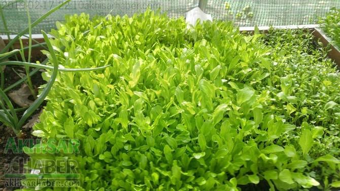 okulda-sera-greenhouse-at-school-(11).jpg