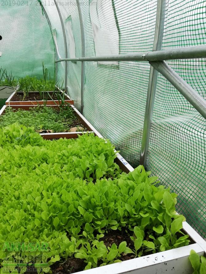 okulda-sera-greenhouse-at-school-(2).jpg