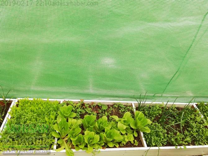 okulda-sera-greenhouse-at-school-(4).jpg