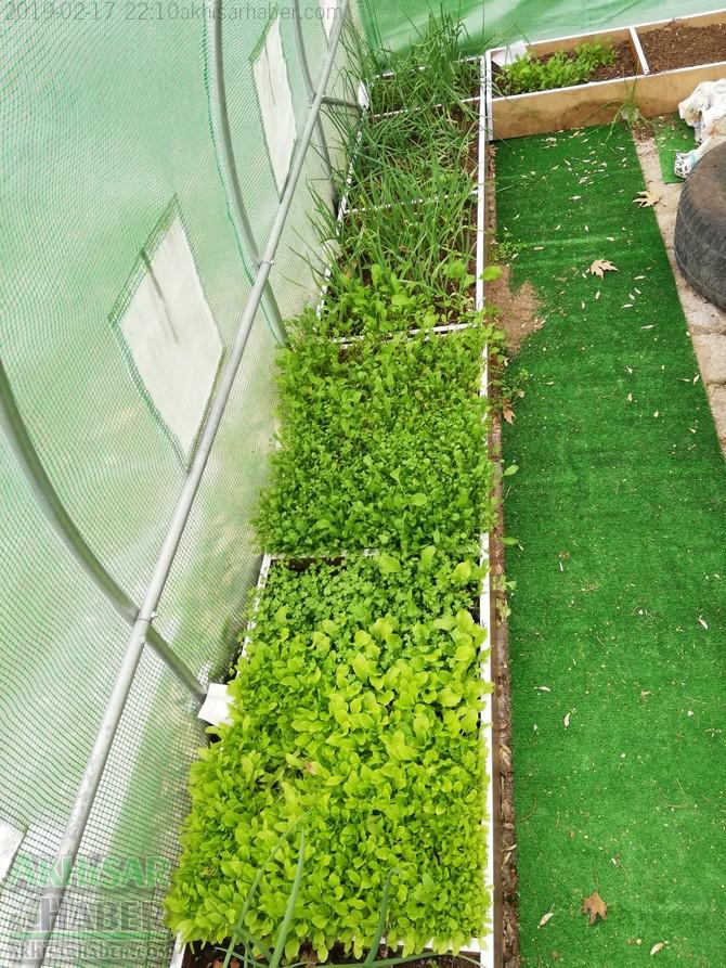 okulda-sera-greenhouse-at-school-(7).jpg