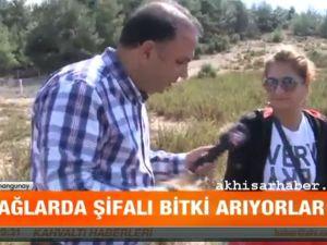 Manisa Akhisarlı Hasan Amcanın şifalı bitkileri umut dağıtıyor